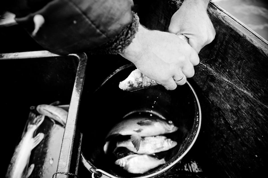 Žuvys traukiamos iš tinklo. © Karolis Kavolėlis