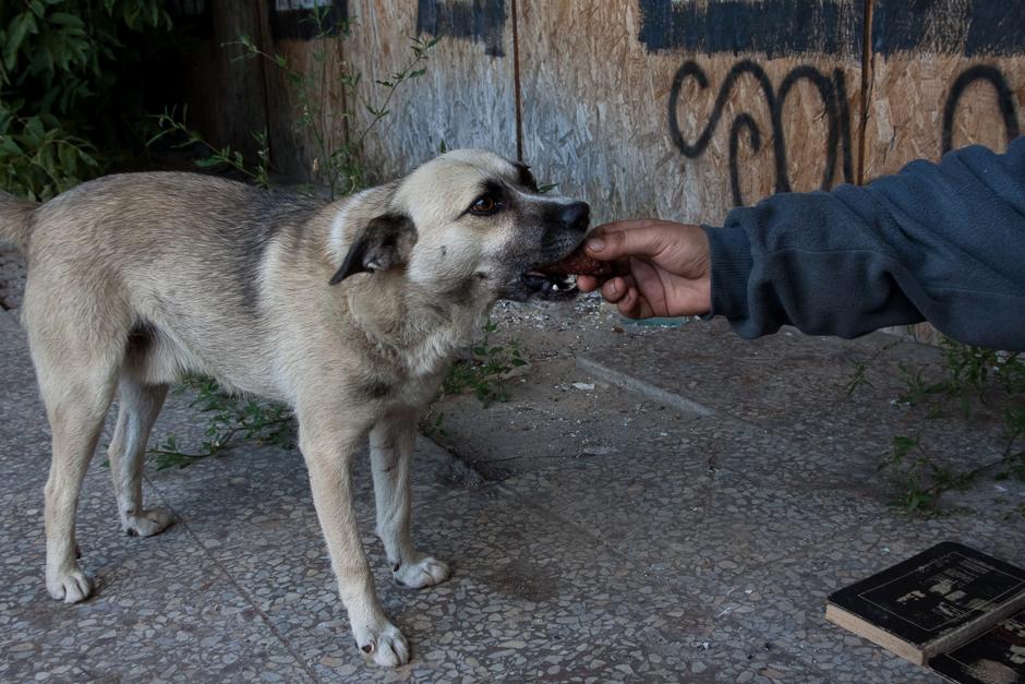 Su Maksu Andrėjus dalinasi savo maistu, net jei tai – rūkyta dešra. © Darius Chmieliauskas